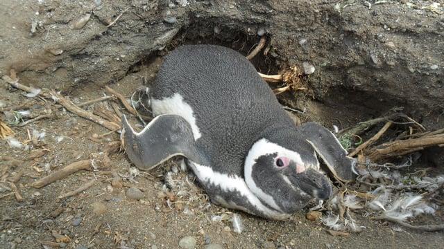 Our mascot penguin Spiffy in her habitat