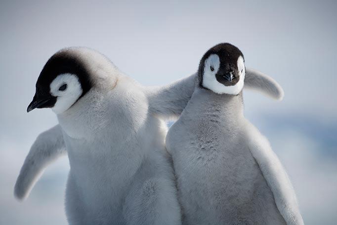 baby penguin pic for blog.jpg
