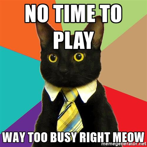 Busy cat meme