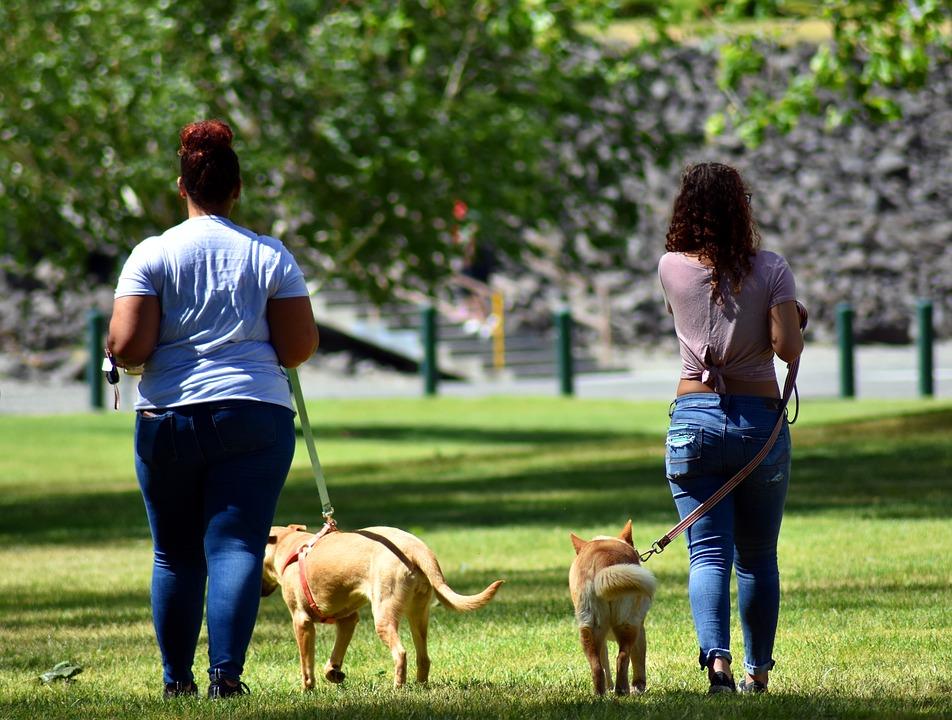 Spiffy dog walking