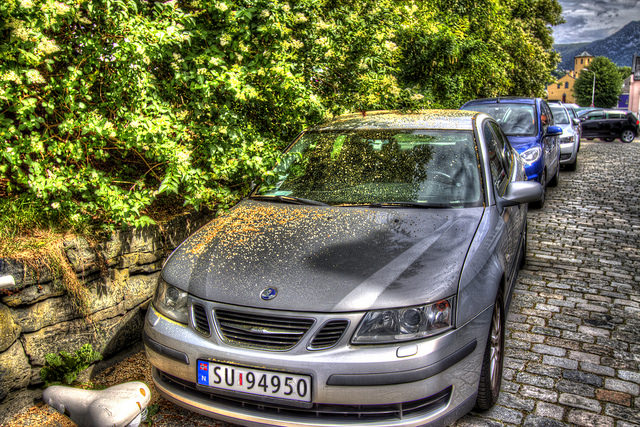 Car covered in pollen and sap parked under trees