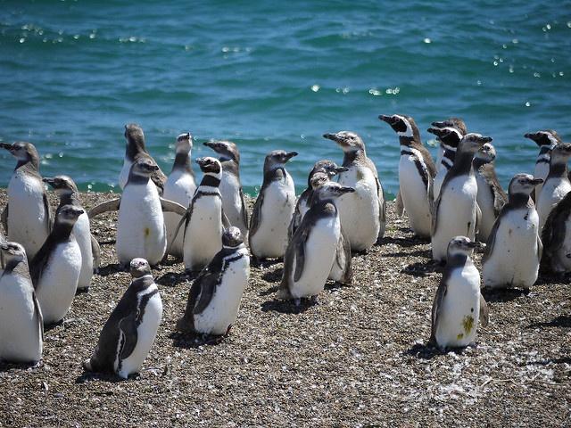 Penguins -highly intelligent ancient birds