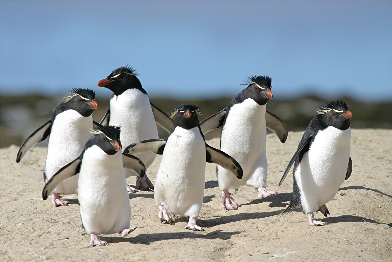 penguins running for blog.jpg