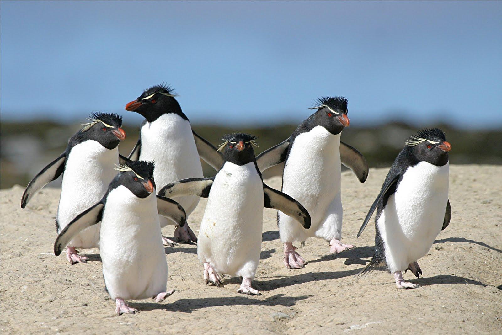 penguins running for blog.jpg