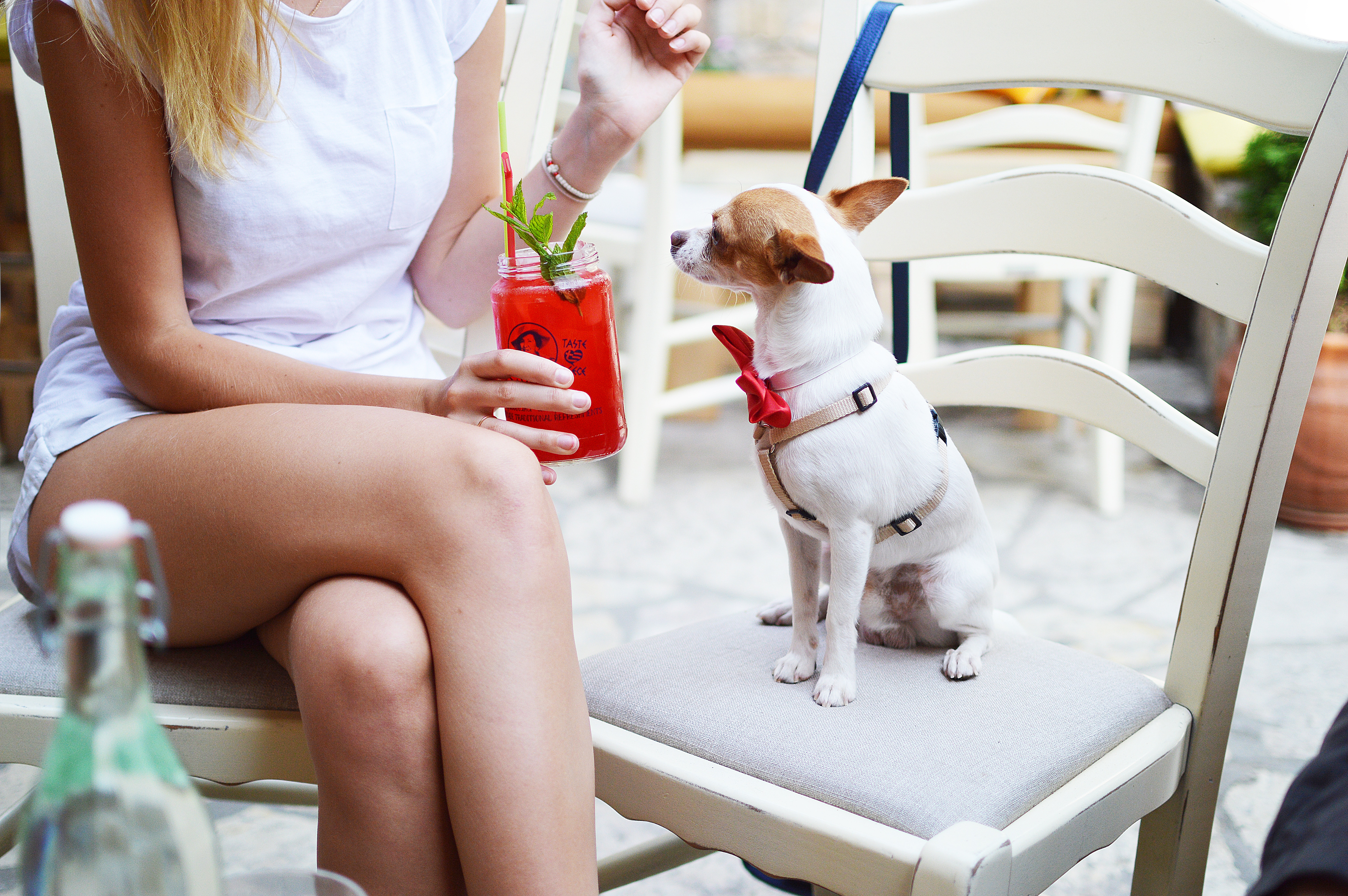 Bring your dog to brunch